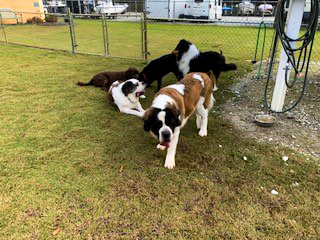 A group of domestic dogs rest and drink water at one of Carolina Colours residential community dog parks
